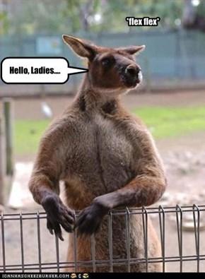 Hello, Ladies....