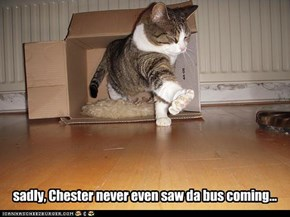 sadly, Chester never even saw da bus coming...