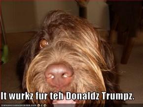 It wurkz fur teh Donaldz Trumpz.