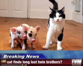 Breaking News - cat finds long lost twin brothers?