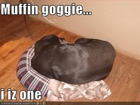 Muffin goggie...  i iz one