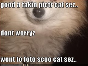 good a takin pictr cat sez.. dont worryz went to foto scoo cat sez..