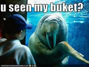 u seen my buket?