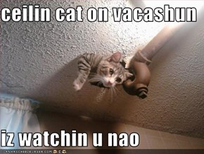 ceilin cat on vacashun  iz watchin u nao