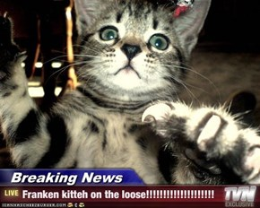 Breaking News - Franken kitteh on the loose!!!!!!!!!!!!!!!!!!!!