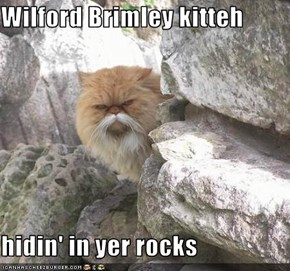 Wilford Brimley kitteh  hidin' in yer rocks