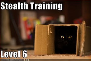 Stealth Training  Level 6
