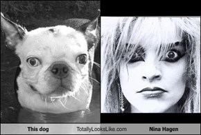This dog Totally Looks Like Nina Hagen