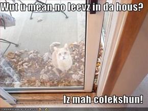 Wut u mean no leevz in da hous?                                  Iz mah colekshun!