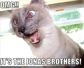 OMG!!  IT'S THE JONAS BROTHERS!