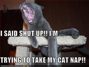 I SAID SHUT UP!! I'M TRYING TO TAKE MY CAT NAP!!
