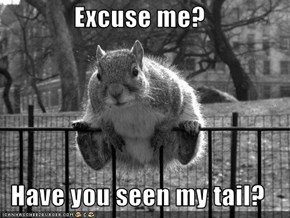 Excuse me?  Have you seen my tail?