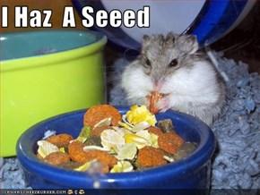 I Haz  A Seeed