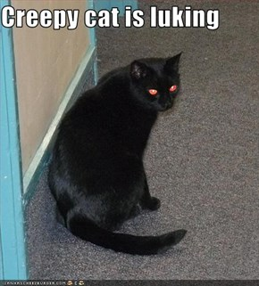 Creepy cat is luking