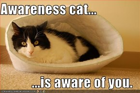 Awareness cat...   ...is aware of you.