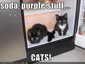 soda, purple stuff,...  CATS!