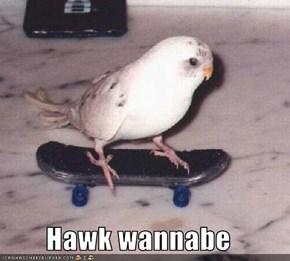 Hawk wannabe