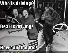 Who is driving? Bear is driving! How can that be?