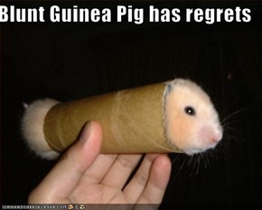 Blunt Guinea Pig has regrets