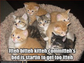 Itteh bitteh kitteh committeh's bed is startin to get too itteh