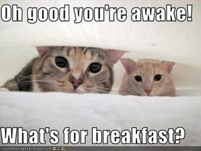 Oh good you're awake!  What's for breakfast?