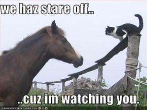 we haz stare off..  ..cuz im watching you.