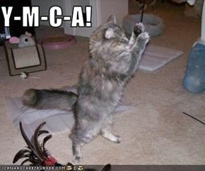 Y-M-C-A!