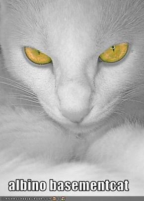 albino basementcat