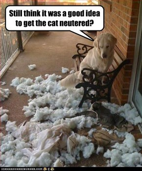 Still think it was a good idea to get the cat neutered?