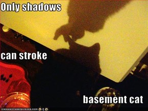Only shadows can stroke basement cat