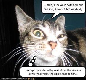 C'mon, I'm your cat! You can tell me, I won't tell anybody!