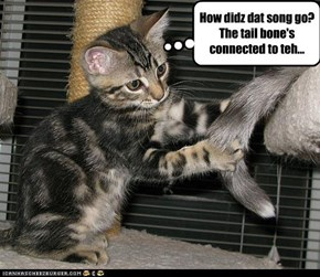 How didz dat song go?   The tail bone's connected to teh...