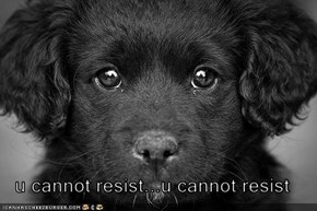 u cannot resist...u cannot resist