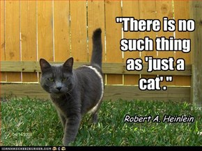 """""""There is no such thing as 'just a cat'."""""""
