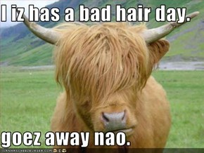 I iz has a bad hair day.  goez away nao.