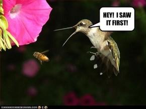 HEY!  I SAW IT FIRST!