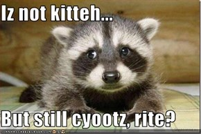 Iz not kitteh...  But still cyootz, rite?