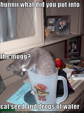 hunnii what did you put into  the mugg? cat seed and drops of water
