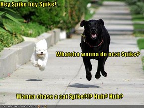Hey Spike hey Spike! Whatcha wanna do next Spike? Wanna chase a cat Spike?!? Huh? Huh?