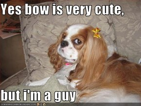 Yes bow is very cute,  but i'm a guy