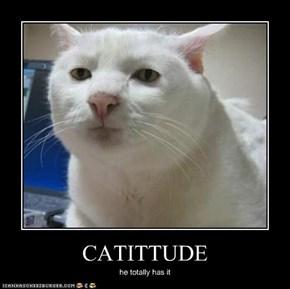 CATITTUDE
