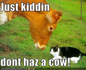 Just kiddin   dont haz a cow!