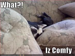 What?!  Iz Comfy