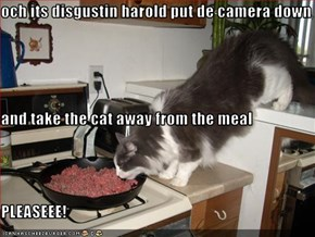 och its disgustin harold put de camera down and take the cat away from the meal PLEASEEE!
