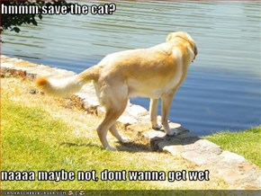 hmmm save the cat?  naaaa maybe not, dont wanna get wet