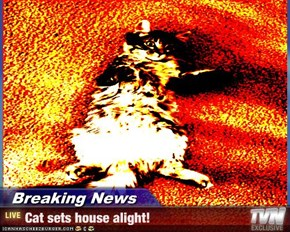 Breaking News - Cat sets house alight!