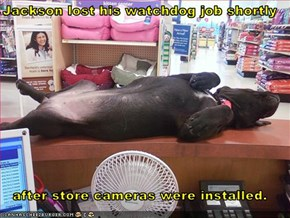 Jackson lost his watchdog job shortly   after store cameras were installed.