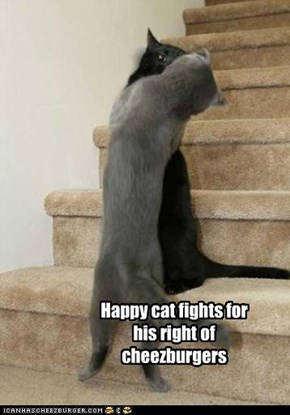 Happy cat fights for his right of cheezburgers