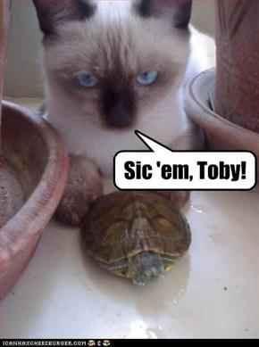 Sic 'em, Toby!