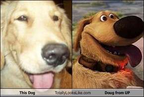 This Dog Totally Looks Like Doug from UP